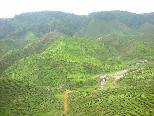 Cameron Highlands 06 - Tea plantation   by Ben Beiske