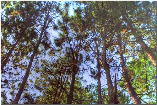 park trees sky mountain nature philippines resort eden pk hdr davao davaocity davaodelsur pinoykodakero garbongbisaya