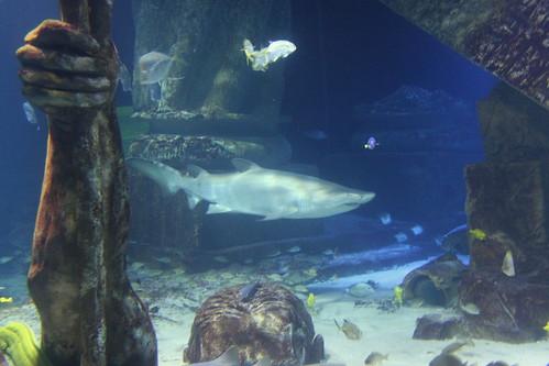 fish aquarium sharks aquariums atlantismarineworldaquarium