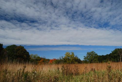 Morton Arboretum 284   by Michael Kappel