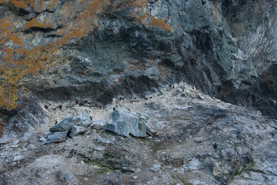 Shag on the Rocks