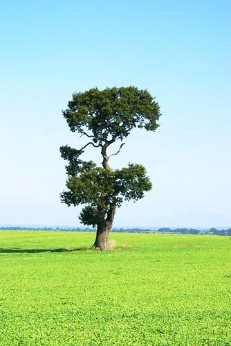 Ria's Tree Etchinghill 10-09-09 IMGP2531