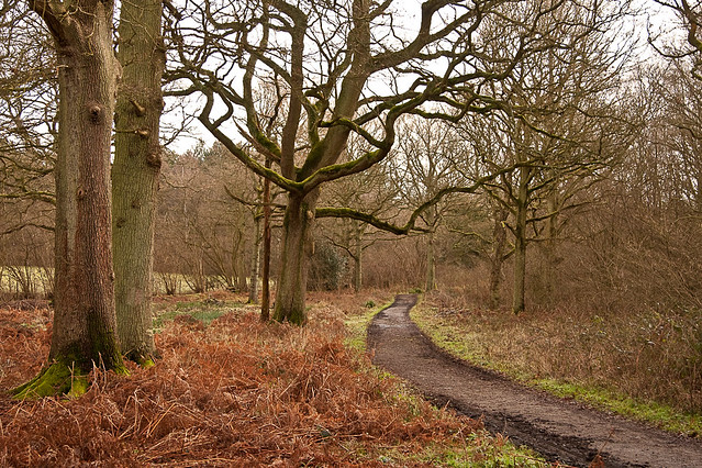 Hammonds Copse