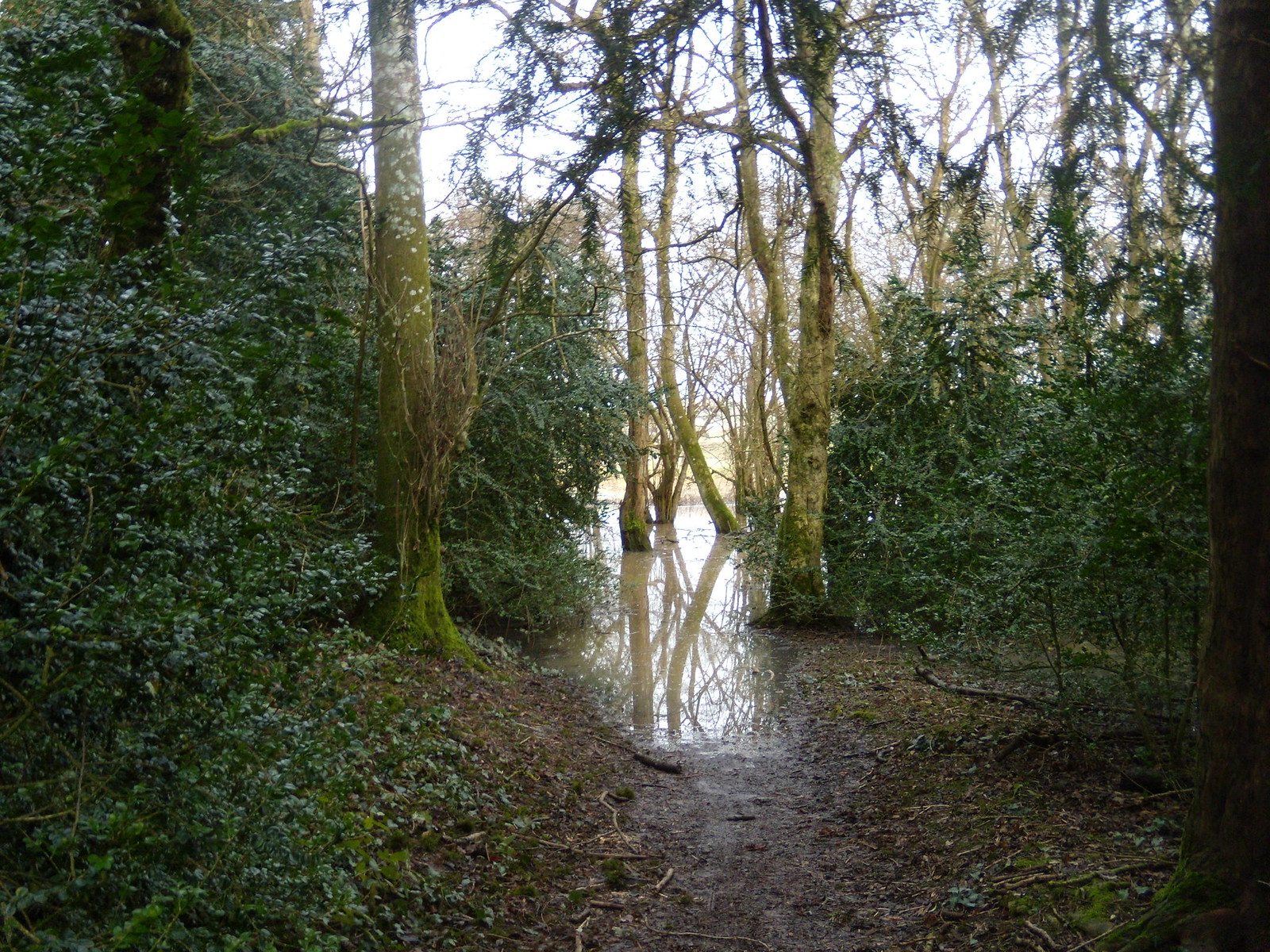 Flooded path We managed to get by. Arundel Circular