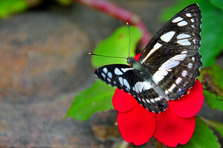 DGJ_4096 - Bye Orchid and Butterfly Farm | by archer10 (Dennis)
