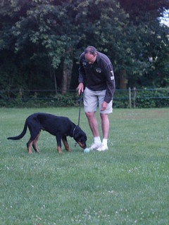 Dog training: trying some sports | by Hotfield