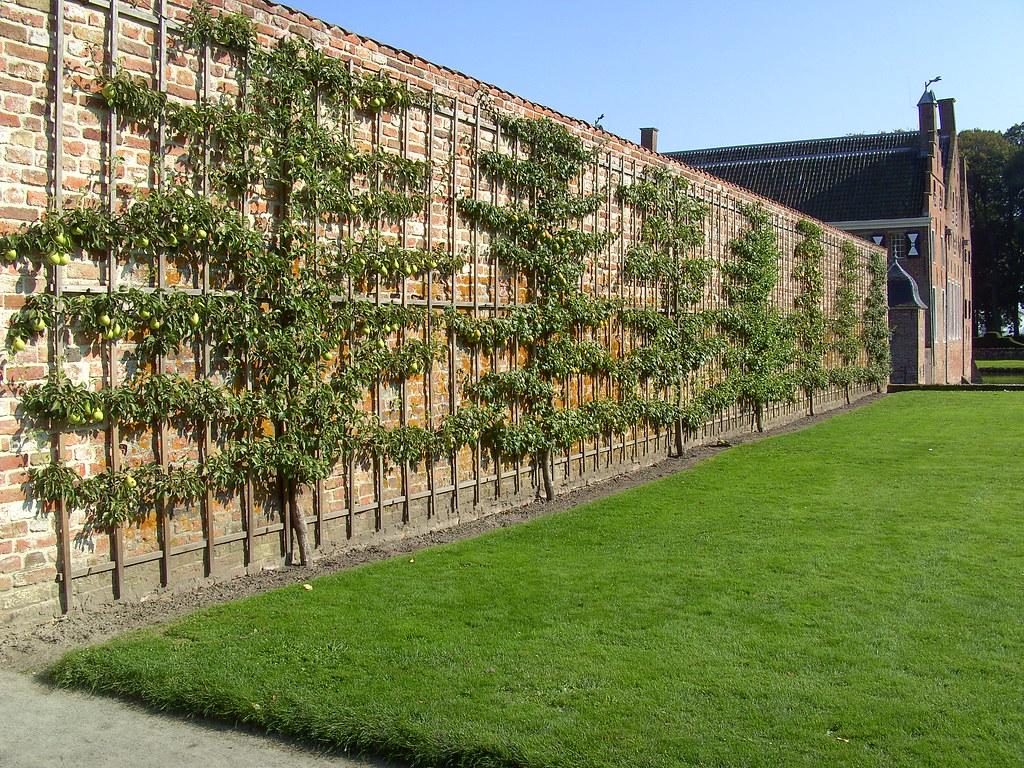 Menkemaborg castle, pear garden wall
