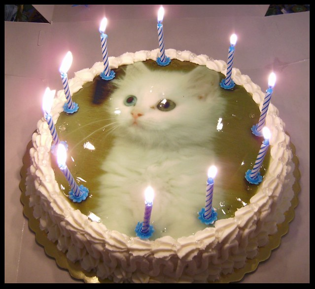 A Birthday Cake For My Cat