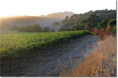 california sunset sun 50mm vineyard nikon wine vine grapes napavalley napa sunrays d300 yountville nohdr