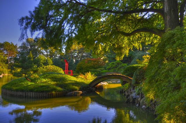 Koi Pond, Brooklyn Botanical Garden