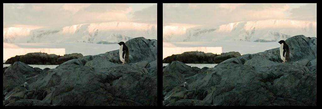 Stereo Penguin Guide