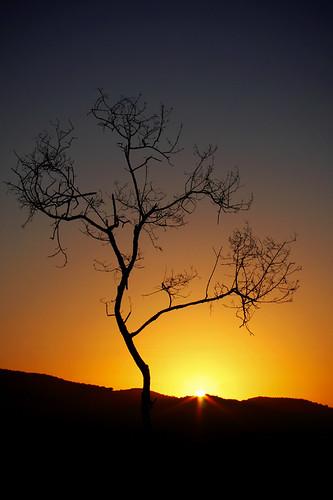 sunset paisajes sun tree sol silhouette landscape atardecer dominicanrepublic árbol silueta repúblicadominicana saúlsantana