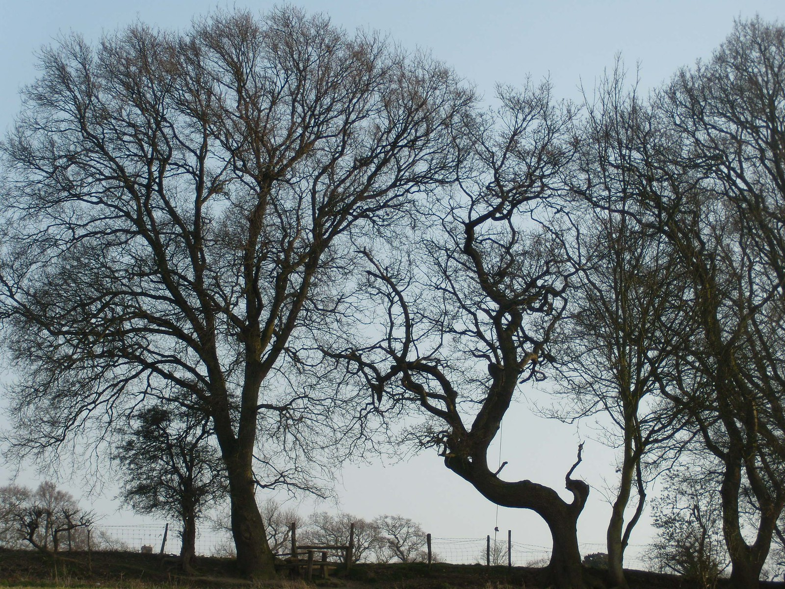 Trees Rye Circular