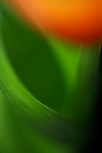 Tulip Abstract by Brenda-Starr