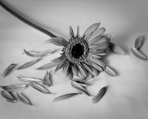 Broken Flower | by TXphotoblog