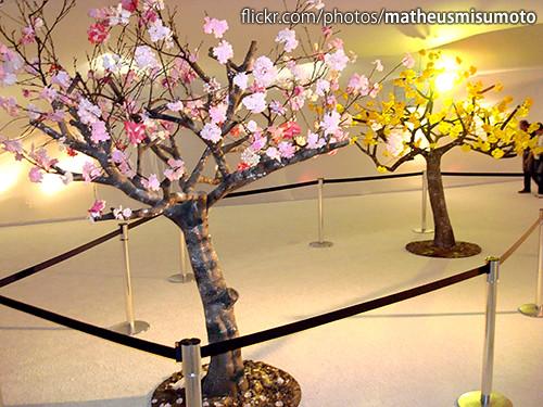 Entre Ipês e Cerejeiras