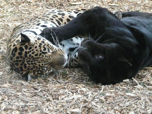 Jaguar Spiele