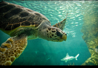 Swimming // Nadando