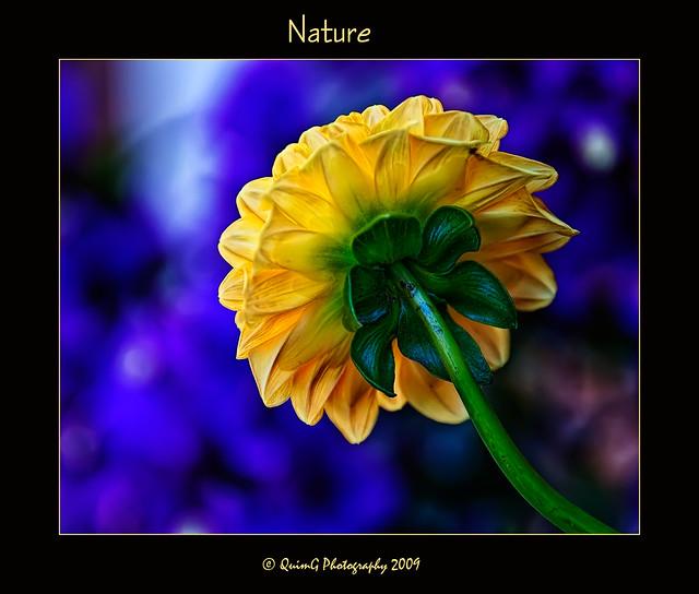 0177 Nature