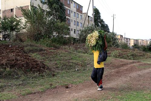Transporting urban produce to market