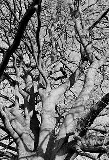 Tree | by Mateusz Kozuch