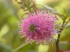 Macro Flower2 by Rinaldo_V