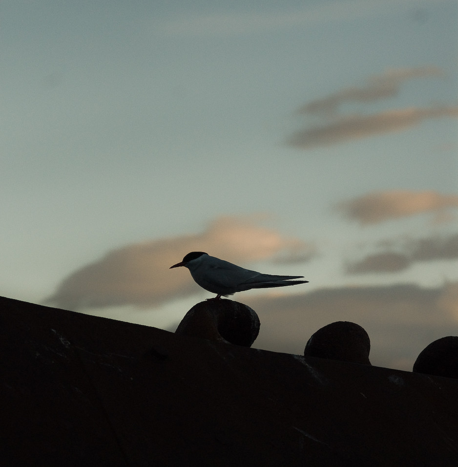 Tern to Rest