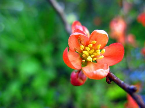 orange flower green thanks outside amor walledgarden flowerstowers struckbyrainbow
