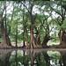 Lago de Camecuaro 2 por Félix Ayala