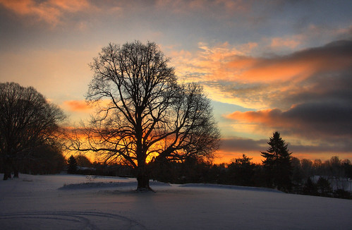 morning winter snow cold tree sunrise pittsburgh golfcourse schenleypark schenley