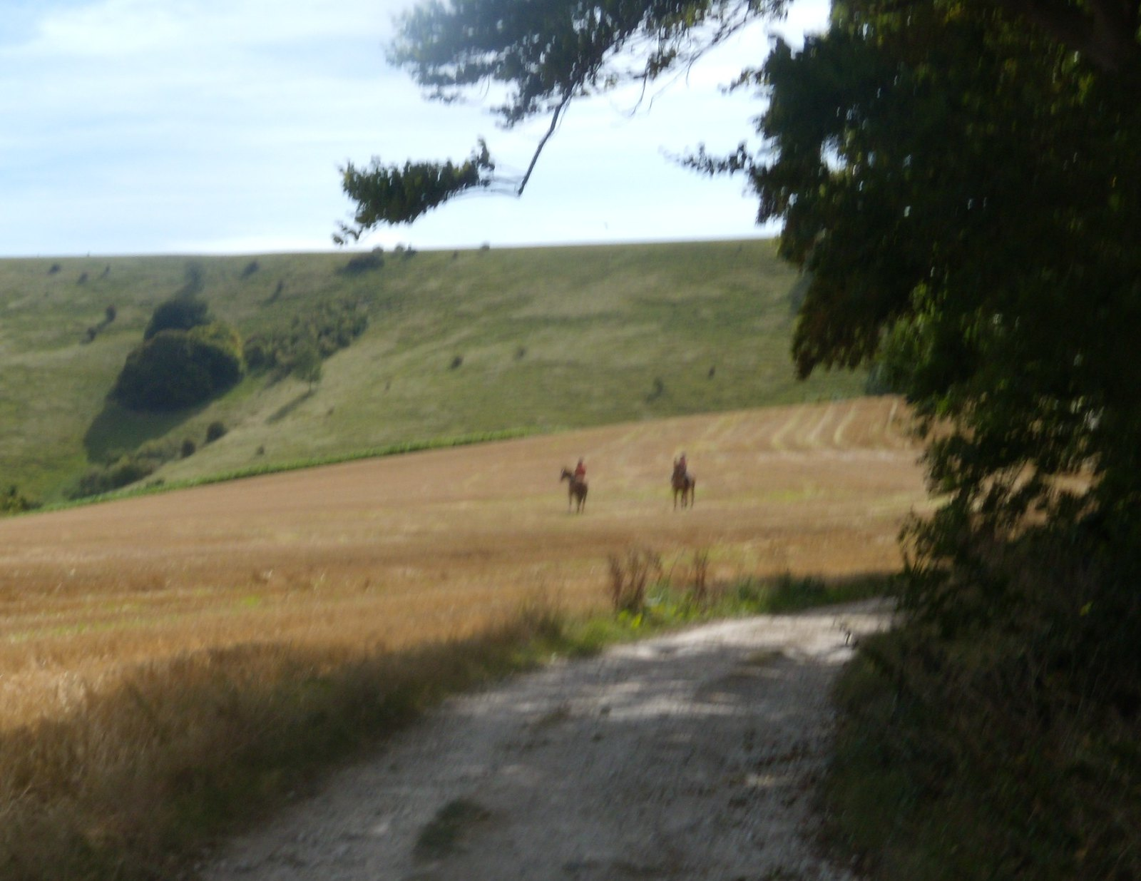 Horses Glynde to Seaford