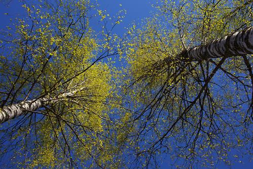 Spring verdure   by Jonne Naarala
