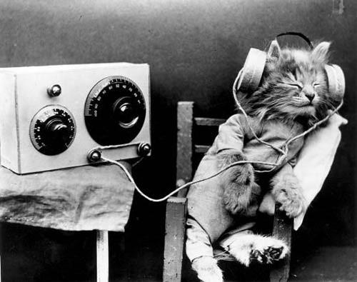 cat_headphones | by stu plimsoles