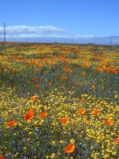 High Desert Flora