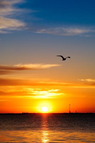 sc birds sunrise photo nikon seagull battery charleston lightroom d300 brianmarchman