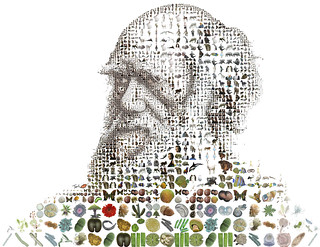 Charles Darwin for Time Magazine | by tsevis