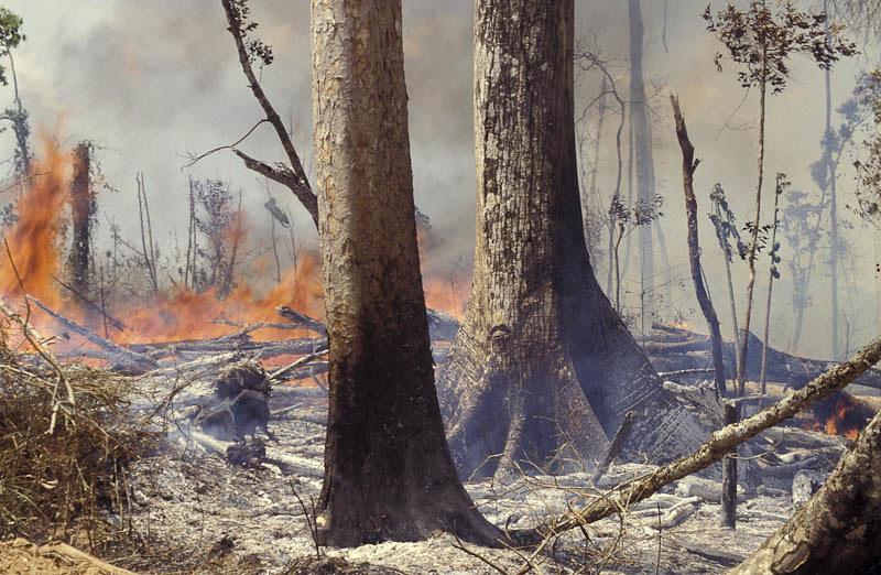 Amazon rainforest deforestation_ecde0317