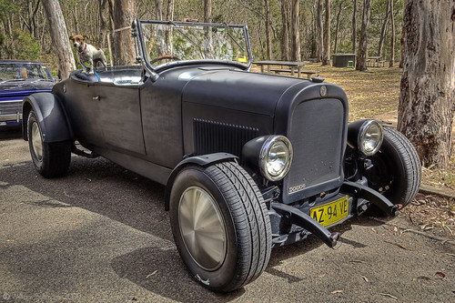 dog car automobile au machine australia canine terrier queensland jackrusselterrier hdr hdri