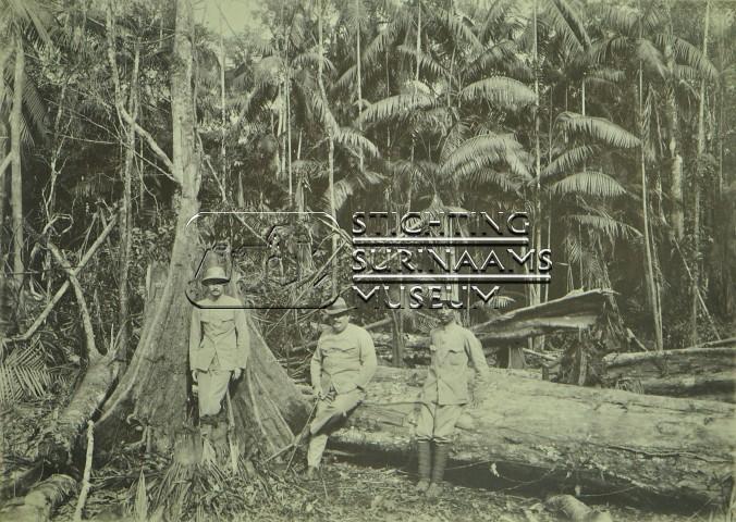 Drie mannen voor gevelde boom
