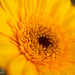 Summer Yellow by David Wilson - thanks for 12M views!