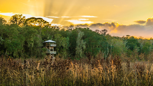 micanopy florida unitedstates us sunset paynesprairie statepark gainesville prairie tower obersvation canon eos m3 alachua county warm nature outdoors