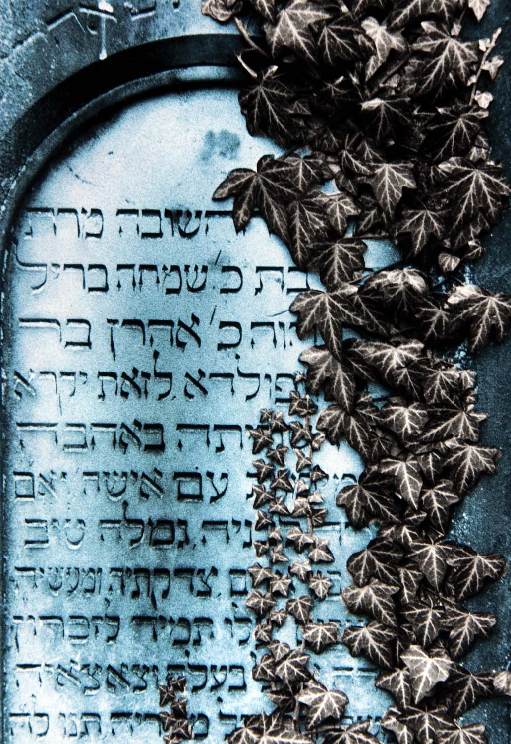 Jewish,Hebrew,inscription,gravestone,grave,stone,germany,Jew,Jewry,Isreal,writing,yard,graveyard,poisen,ivy,overgrown,over,grown,toned,black,white,blue,cyan,dead,deceased,synagoge,synagogue,church,Semitic,language,classical,classical Hebrew,Judaism,RIP,rest,peace,memorial,memorium,gave,men,women,cemetary,cemetery,this photo rocks!,B/W,partial,mixed,color,hotpics,hotpic,hotpick,hotpicks,graves,tomb,tombs,cemetario,muchacha,femenina,de,la,mujer,se\u00f1ora,lady,female,woman,girl,\u5973\u6027\u30e1\u30b9\u306e\u5973\u6027\u306e\u5973\u306e\u5b50,\u592b\u4eba\u5973\u6027\u5987\u5973\u5973\u5b69,fille,f\u00e9minine,femme,dame,hotpix!