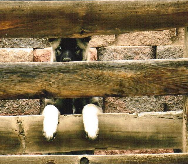 elkhound in jail