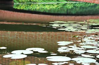 Lily pond, reflection of the brick bridge in the pond, beautiful garden at জাতীয় স্মৃতি সৌধ Jatiyo Smriti Soudho Independence memorial park and gardens, Savar, Dhaka, Bangladesh