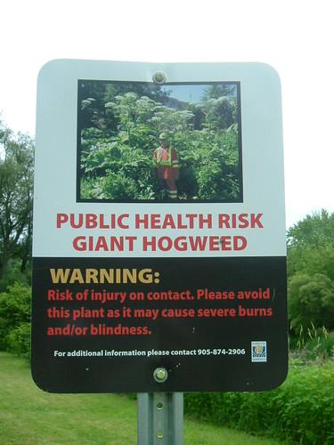 Hogweed Warning | by DuncOne