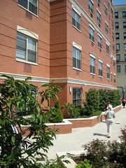 1750 Davidson Avenue Garden