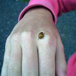 ladybird-luck