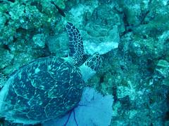 Cayman Islands Twilight Zone 2007: May 30 Log