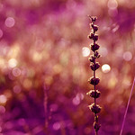~Purple Delight
