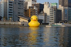 Rubbe Duck in Osaka / Florentijn Hofman | by hetgallery